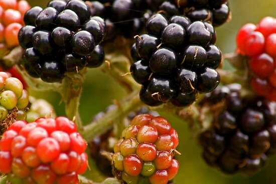 Blackberries by Geoff Carpenter