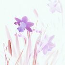 Purple daffodils by stuant63