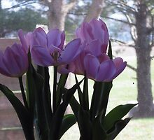 PRUPLE TULIPS by Debra Willis