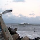 Gull and Break by David Turton