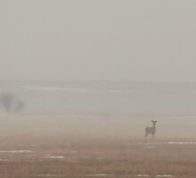 A Deer In The Mist by Stephen Thomas