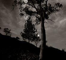 One Moonlit Night by Pamela Inverarity