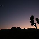 Joshua Tree by Stephanie Sim