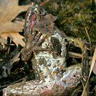 BeautifullyDead/Frog by finnsfotos