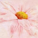 Pink Daisy * Wall Art by AnaCBStudio