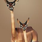 GERENUKS - KENYA by Michael Sheridan