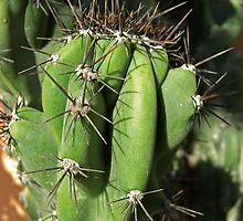 Cactus Close-up 1 by Christopher Johnson