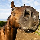 Inquisitive horse by mrfotos