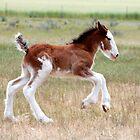 Fast foal by Kat36
