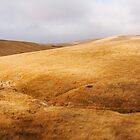 James Archibald Landscapes  by James  Archibald