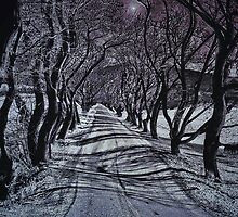 Frosted Lane by Charles Oliver