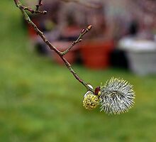 Simple Catkin by missmoneypenny