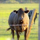 Country Cow by MichiganGirl
