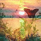 Butterfly Sunset by R&PChristianDesign &Photography