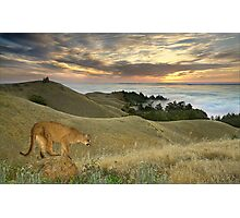 1177-Misty Cougar Sunset Photographic Print