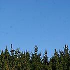 Pine Trees (2008) by briarjane