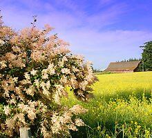 Sequim Summer ~ Olympic Peninsula, Washington by lanebrain photography