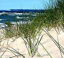 dune grass by shootzpics