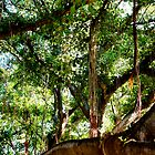 Banyan Tree Cathedral  by TWindDancer