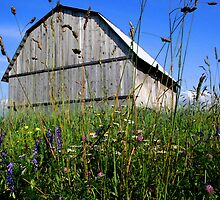 Barn and meadow by tanmari
