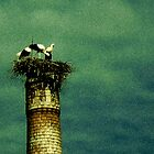 Stork by Metadea