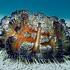Sea Urchin by Marcel Botman