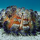Sea Urchin by Marcel Botman