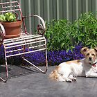 the herb garden(dog not included) haha by bLo0dLuSt (djdota23