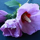 Hibiscus syriacus #2 by Elaine Teague