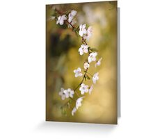 Soft on Spring Greeting Card