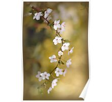 Soft on Spring Poster
