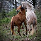 Wild Horses by Sharon Morris