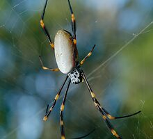 Golden Orb Weaver by Andrew Trevor-Jones