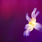 Blooming Bokeh by duncandragon