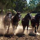 Plowing the dust - Lardner Park,Gippsland,  by Bev Pascoe