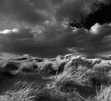 Studland Beach 2 by stephen foote
