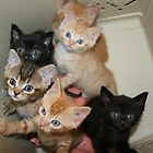 Six hungry kittens by orchidcat