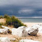 Beach grass by Jen Orr