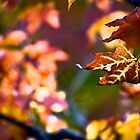 Colors of Fall by Jen Orr