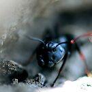 Ant Closeup by Dennis Stewart