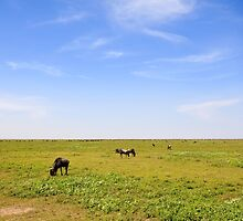 The Endless Plains of Serengeti by Nickolay Stanev