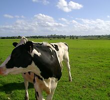 The Six-Legged Cow by reflector