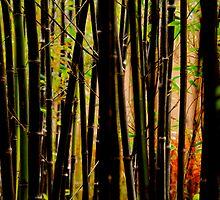 bamboo by eliamazor