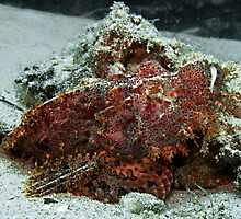 Scorpionfish by Marcel Botman