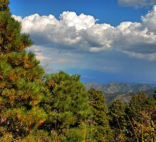 Mt. Lemmon Hike by Barbara Manis