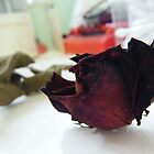 Wilting Rose by JessBabbyy