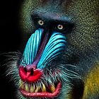 Mandrill by Natalie Manuel