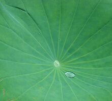 single droplet on leaf by KeenBubble08