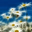 Daisies by Jeremy Owen