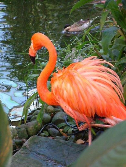 Pretty Pink Flamingo by AnnDixon